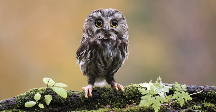 Owl sitting on a branch.