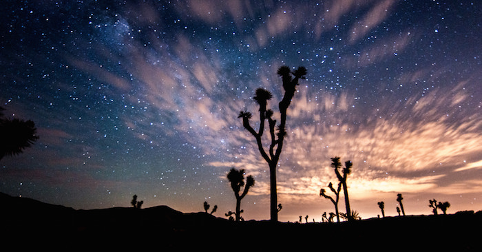 A starry night sky with a cactus in the foreground at Joshua National Monument.