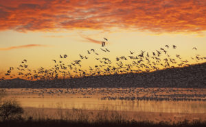 A flock of bird over the water during sunset.
