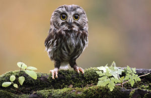 Small owl perched on a tree branch.