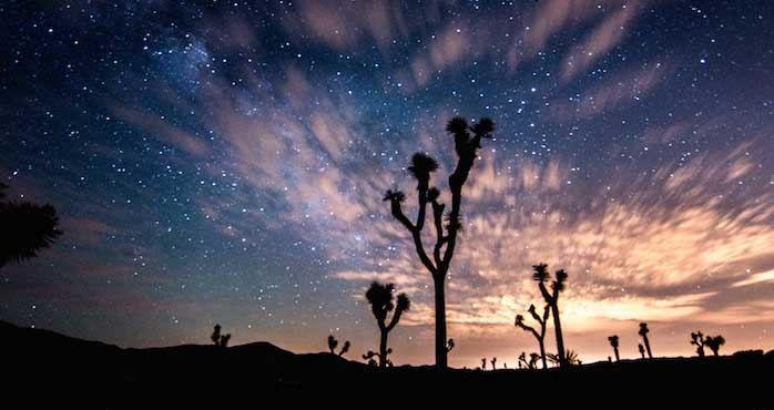 Joshua Tree National Park at sunset with cactus in foreground.