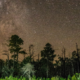Stephen C. Foster State Park Named First International Dark Sky Park in Georgia (U.S.)