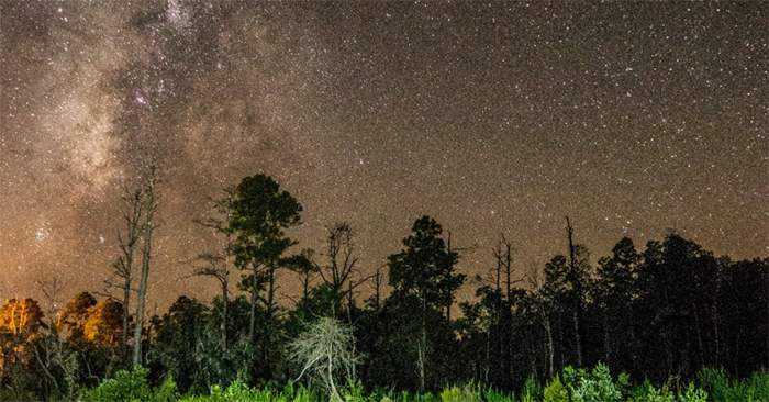 Stephen C. Foster State Park Named First International Dark Sky Park in Georgia (U.S.) Image
