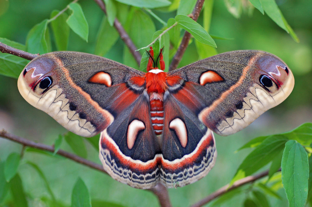 Like moths to a flame: National Moth Week, and how you can help our nighttime wildlife Image
