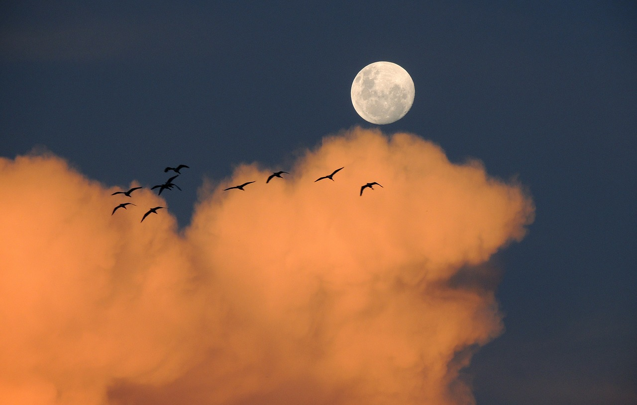 Light Pollution Poses Threat to Migrating Birds Image