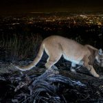 Light Pollution Research Shows Humans and Wildlife Can Coexist Thumbnail