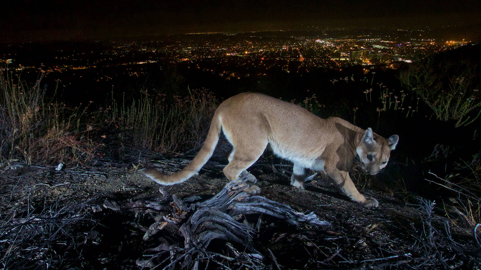 Light Pollution Research Shows Humans and Wildlife Can Coexist Image