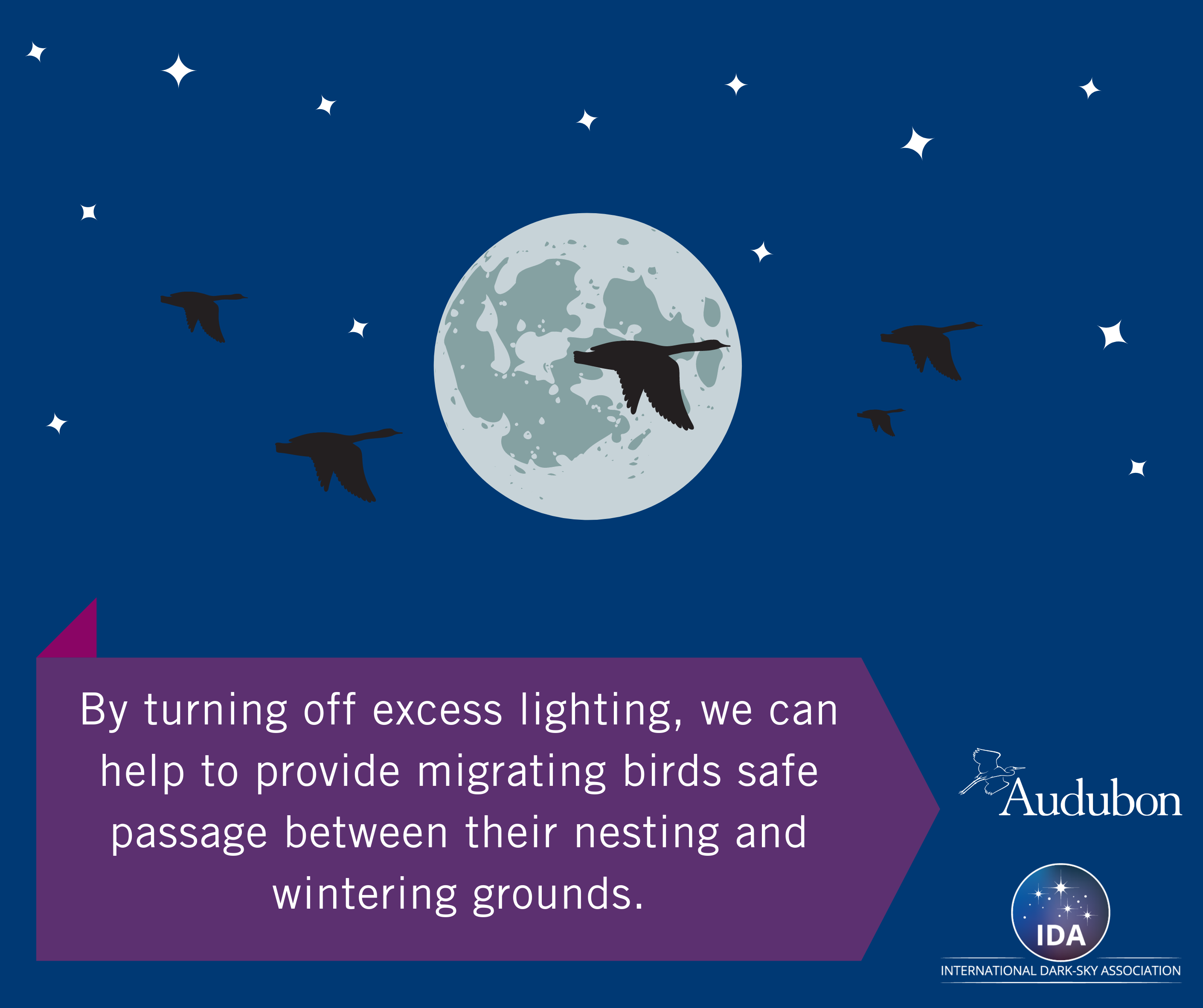 What You Should Know About Bird Migration and Light Pollution Thumbnail