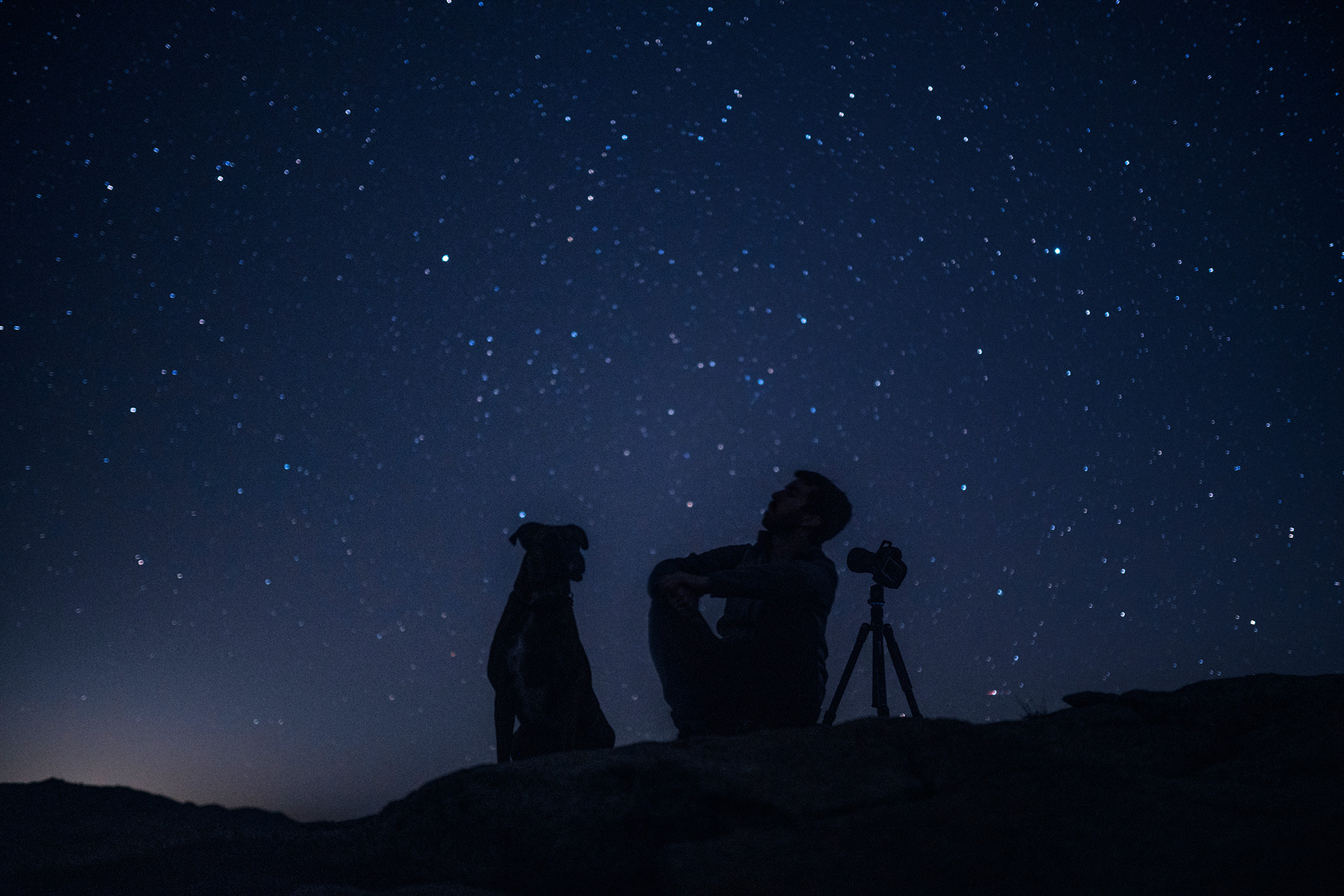 9 Stellar Photos of dogs and the night sky