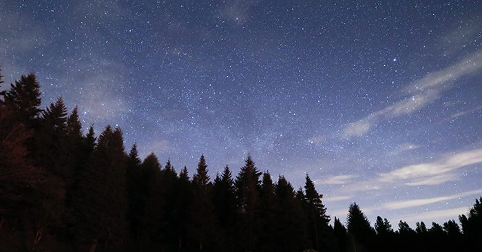 Davagh Forest under a starry sky.
