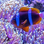 Artificial Light Impacting Coral Reef Species: A Case Study Thumbnail