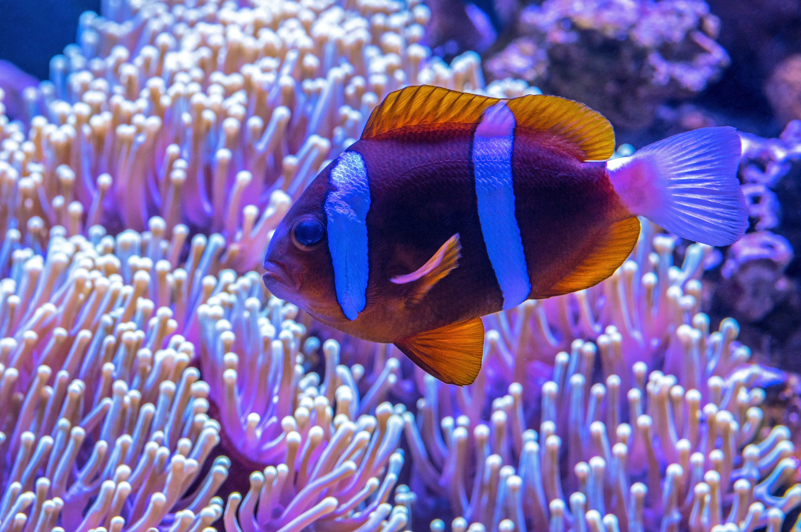 Artificial Light Impacting Coral Reef Species: A Case Study Image